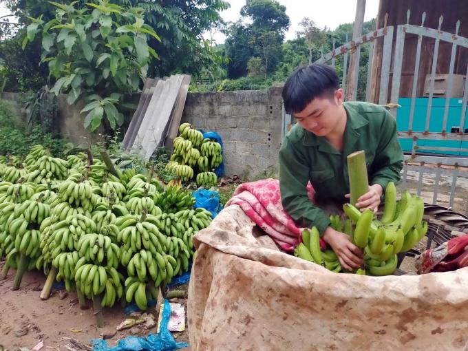 cho-chuoi-tay-bac-nhatnong2